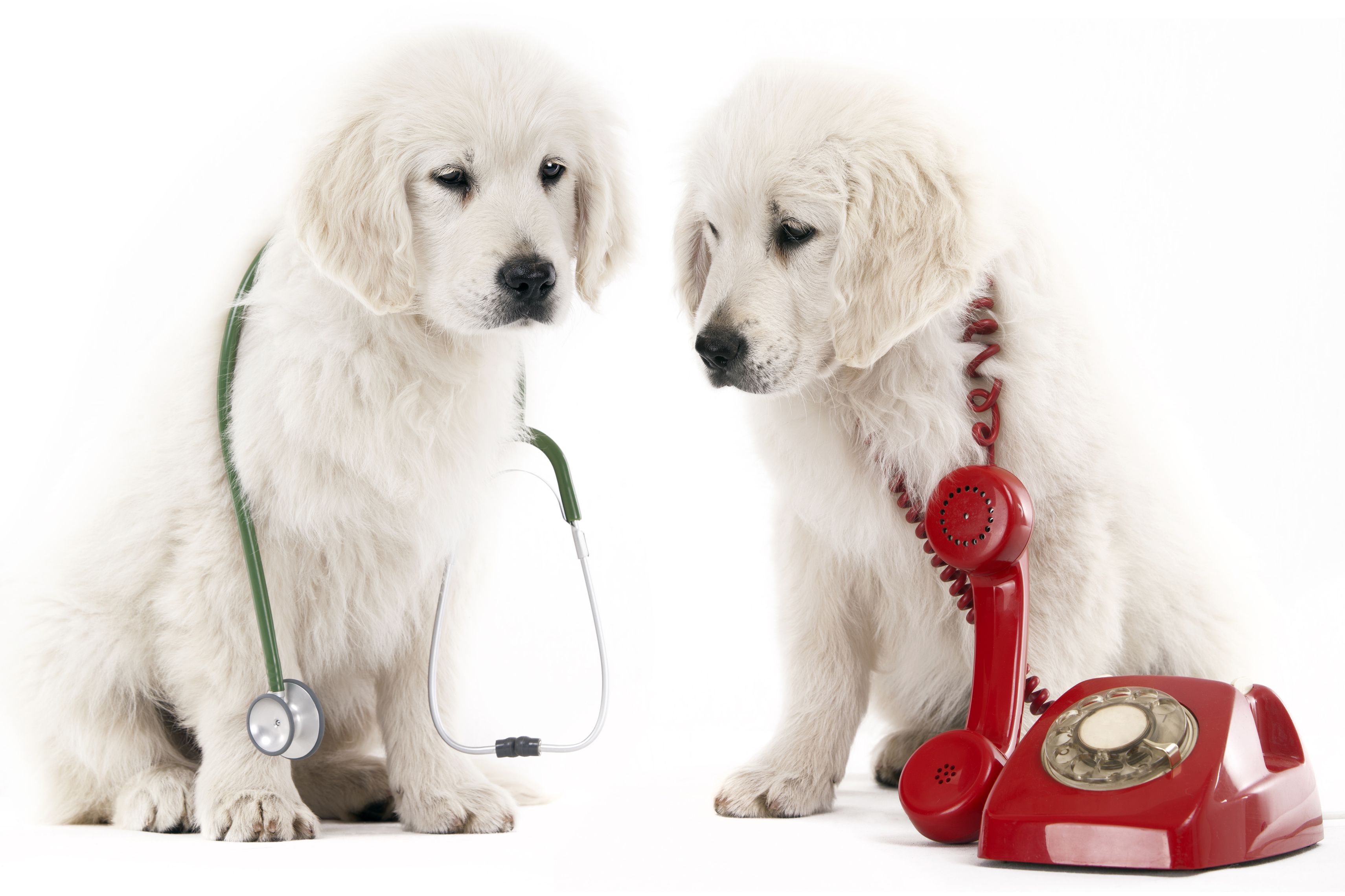 Dogged by high phone costs? Let Fido give you a free health check today